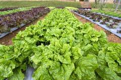 Légumes organiques dans le jardin images stock