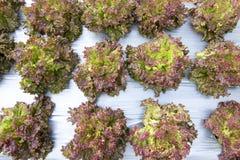 Légumes organiques dans le jardin photos libres de droits
