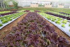 Légumes organiques dans le jardin photo stock