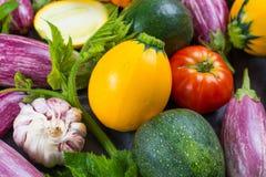 Légumes organiques frais - courgette ronde, petites aubergines, Tom Photographie stock libre de droits