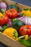 Légumes organiques frais - courgette ronde, petites aubergines, Tom Image libre de droits