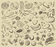 Légumes peints à la main, fruits, épices, herbes Images stock