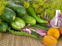 Légumes pour le ferment Photographie stock