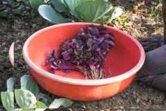 Légumes rouges Image stock