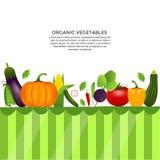 Légumes sains Photos stock