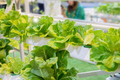 Légumes sains Photos libres de droits