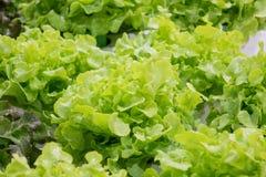 Légumes sains végétaux organiques Images libres de droits