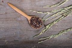 Légumes tarte, plan rapproché de nourriture Image stock