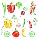 Légumes tirés par la main d'aquarelle Fond de légumes de nourriture d'Eco illustration libre de droits