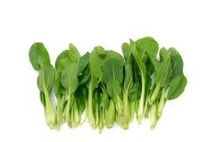 Légumes verts Photo libre de droits