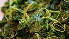 Légumes verts bouillis Photographie stock libre de droits