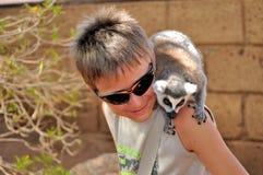 Lémur sur la tête Image libre de droits