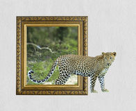 Léopard dans le cadre avec l'effet 3d Images stock