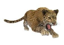 léopard de grand chat Images libres de droits