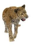 léopard de grand chat Image stock