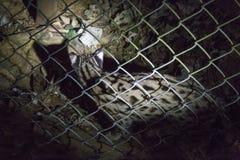 Léopard en parc de Cuc Phuong image libre de droits