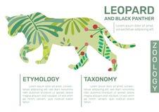 Léopard Infographic illustration libre de droits