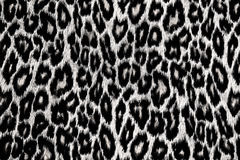 Léopard, jaguar, peau de lynx Photo libre de droits