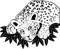 Léopard sur la chasse Photographie stock libre de droits