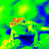 Lézard épineux de désert infrarouge Photographie stock