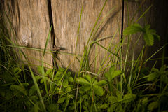 Lézard dans l'herbe Photos libres de droits
