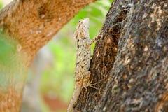 Lézard de Brown, tache floue colorée de fond de beauté Un reptile Images stock