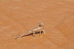 Lézard de désert photographie stock