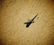 Lézard de gecko photo libre de droits