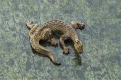 Lézard en bronze Images stock