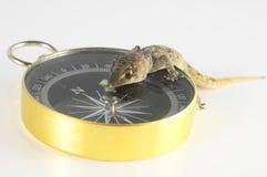 Lézard et boussole de gecko images libres de droits
