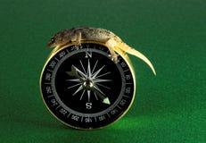 Lézard et boussole de gecko photographie stock libre de droits