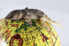 Lézard et globe de gecko photo libre de droits