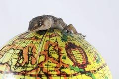 Lézard et globe de gecko photographie stock