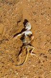 Lézard mort sur le fond de sable dans le désert Photo libre de droits