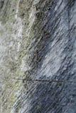 Lézard se mélangeant dedans avec le mur en pierre Photo stock