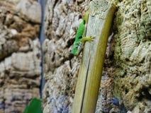 Lézard se reposant sur la branche dans le zoo à Augsbourg en Allemagne photographie stock