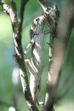 Lézard sur l'arbre Photographie stock