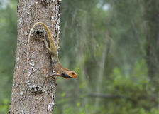 Lézard sur l'arbre Photos stock