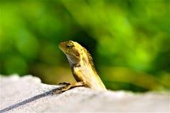 Lézard sur le bord de la route, animal en gros plan de nature de macro petit photo stock