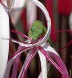 Lézard vert buvant d'une fleur image libre de droits