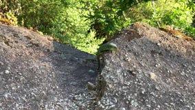 l?zard vert sur une fin de roche  banque de vidéos