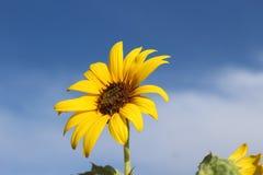 Lézarder au soleil Images libres de droits