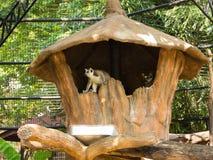 Lêmure no jardim zoológico Imagem de Stock Royalty Free