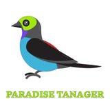 Línea Art Icon del pájaro del Tanager del paraíso Fotografía de archivo libre de regalías