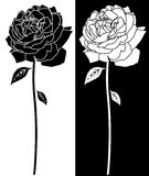 Línea arte de la floración de Rose Foto de archivo