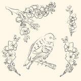 Línea arte Sakura con un pájaro azul para una decoración de la boda Florezca la decoración para una boda o ahorre las tarjetas de stock de ilustración