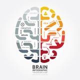 Línea color del diagrama del diseño del cerebro del vector de Infographics del monocromo Fotos de archivo