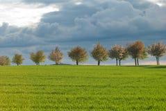 Línea de árbol Imagen de archivo libre de regalías
