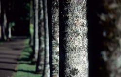 Línea de árbol Fotos de archivo