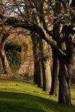 Línea de árboles Imagenes de archivo